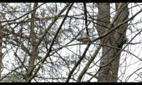 Jong gedaan - Oud geleerd (korte documentaire)